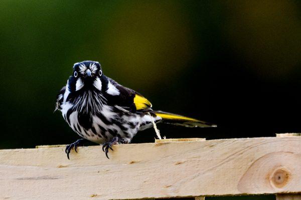 CAROLE-BIRD-PHOTOS172