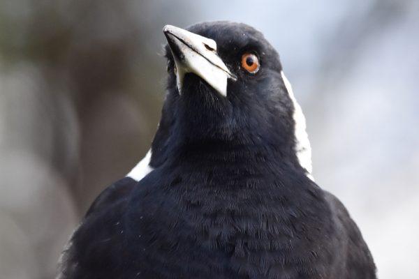 CAROLE-BIRD-PHOTOS175
