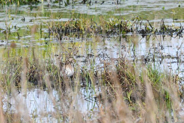 CAROLE-BIRD-PHOTOS178