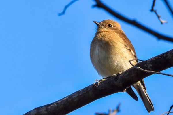 CAROLE-BIRD-PHOTOS182
