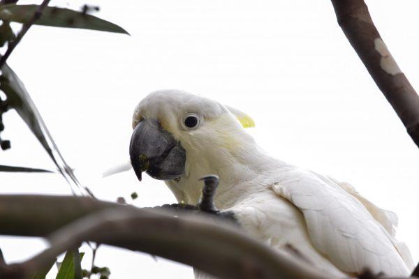CAROLE-BIRD-PHOTOS183