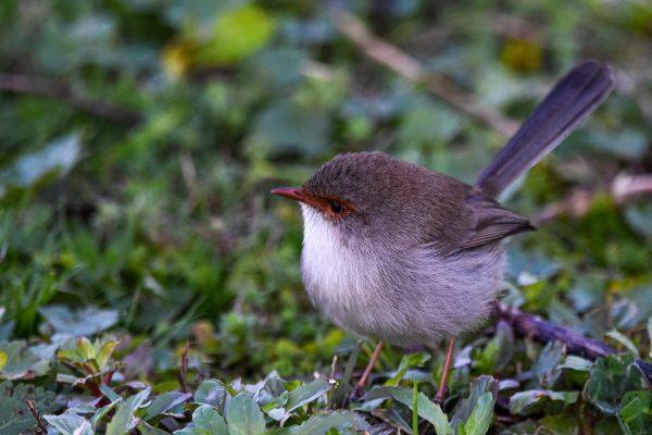 CAROLE-BIRD-PHOTOS185