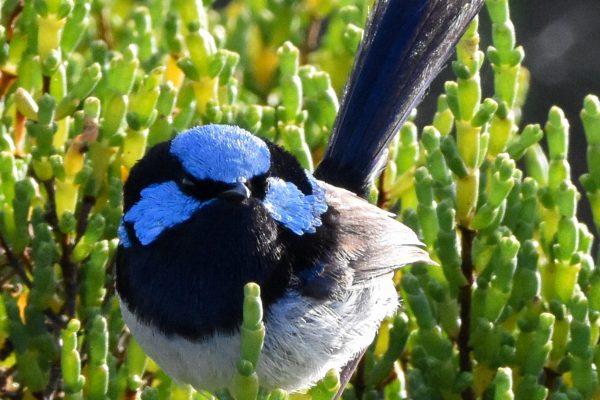 CAROLE-BIRD-PHOTOS187