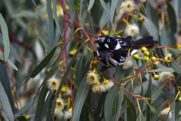 CAROLE-BIRD-PHOTOS188
