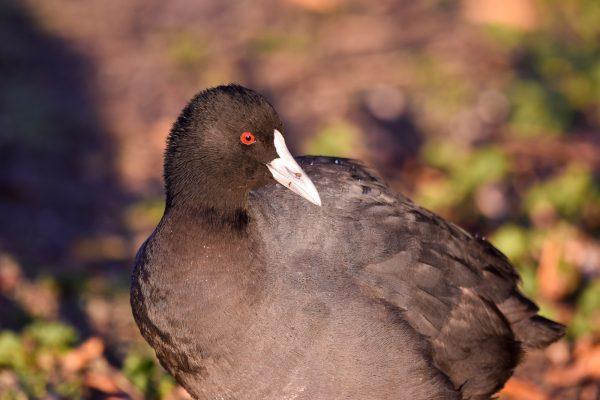 CAROLE-BIRD-PHOTOS193