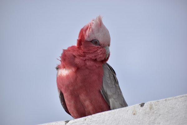 CAROLE-BIRD-PHOTOS194
