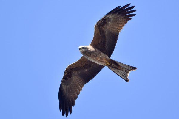 CAROLE-BIRD-PHOTOS195