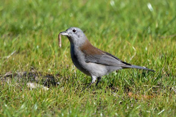 CAROLE-BIRD-PHOTOS196