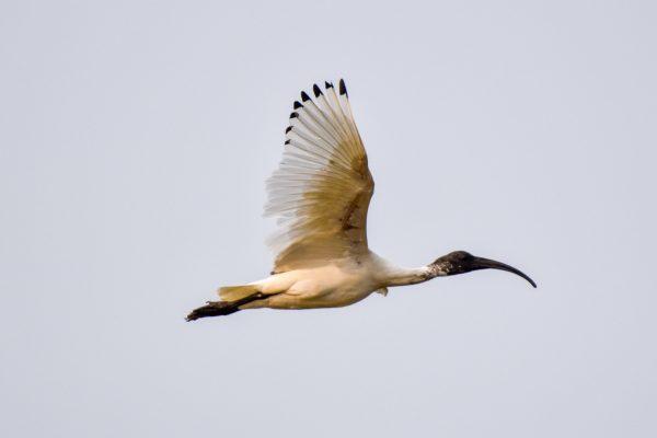 CAROLE-BIRD-PHOTOS197