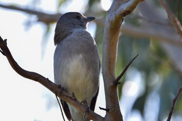 CAROLE-BIRD-PHOTOS199