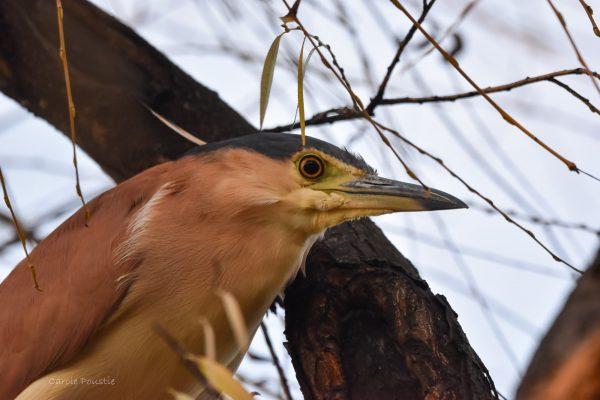 CAROLE-BIRD-PHOTOS2