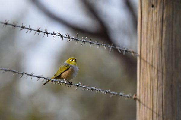 CAROLE-BIRD-PHOTOS200