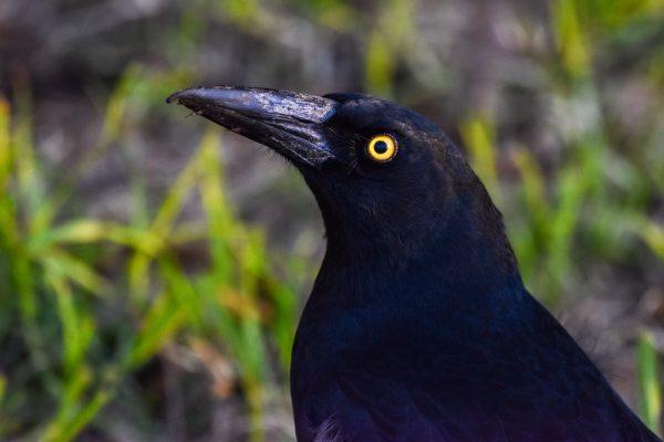 CAROLE-BIRD-PHOTOS206