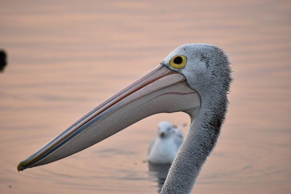 CAROLE-BIRD-PHOTOS21