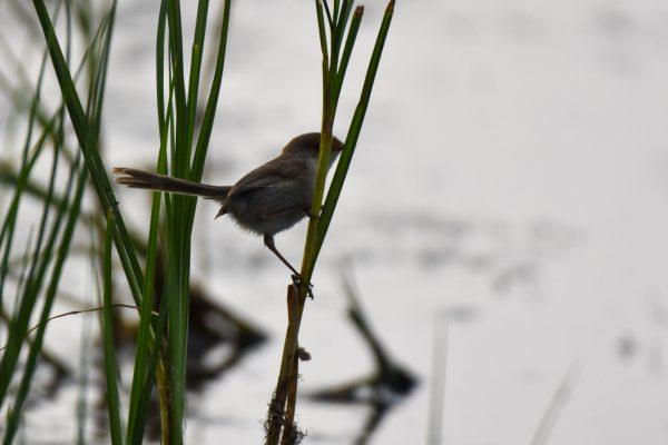 CAROLE-BIRD-PHOTOS211