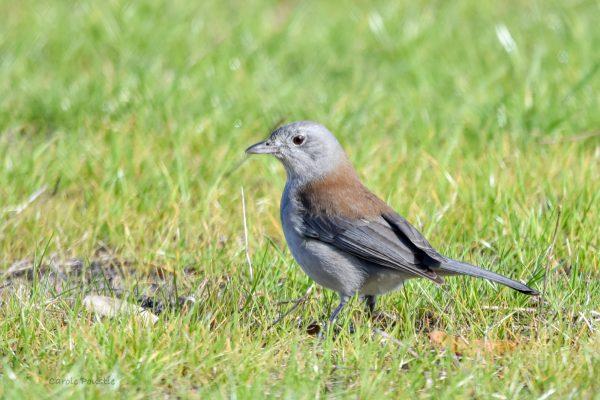 CAROLE-BIRD-PHOTOS212