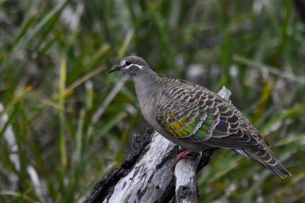 CAROLE-BIRD-PHOTOS218