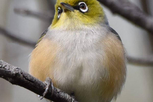 CAROLE-BIRD-PHOTOS221