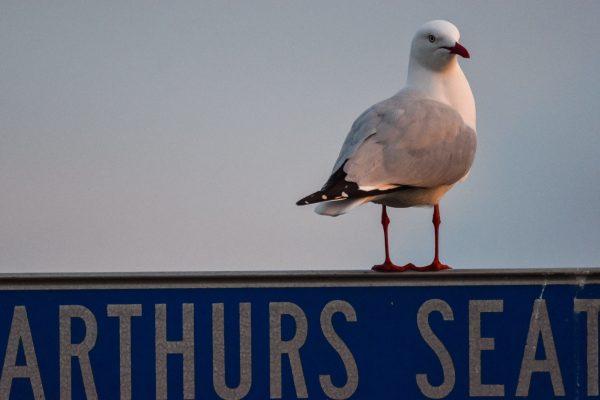 CAROLE-BIRD-PHOTOS222