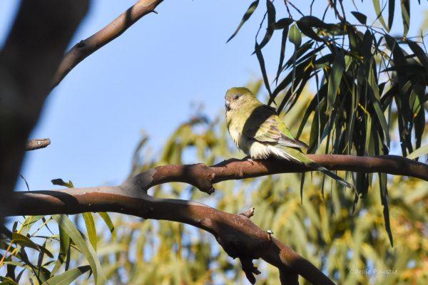 CAROLE-BIRD-PHOTOS224