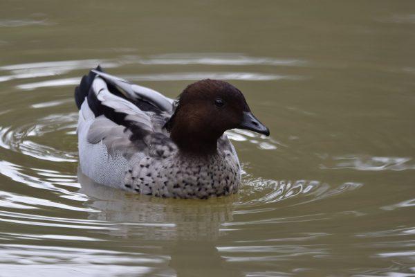 CAROLE-BIRD-PHOTOS225