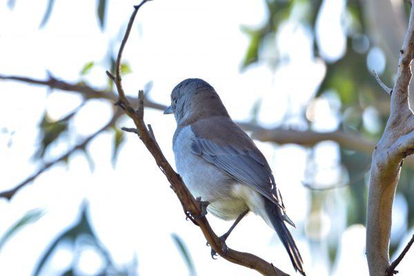 CAROLE-BIRD-PHOTOS226