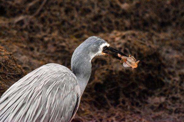 CAROLE-BIRD-PHOTOS227