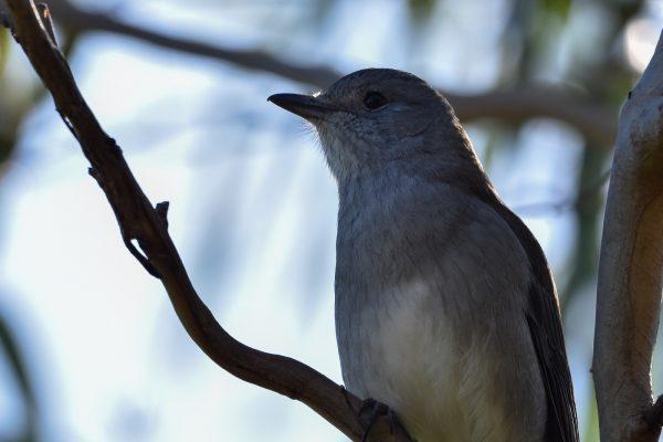 CAROLE-BIRD-PHOTOS228