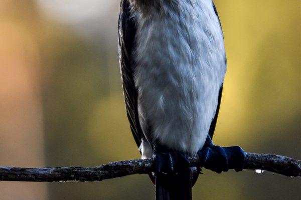 CAROLE-BIRD-PHOTOS23