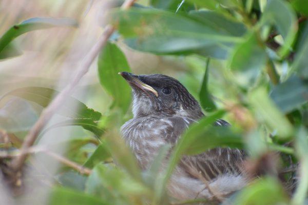 CAROLE-BIRD-PHOTOS24