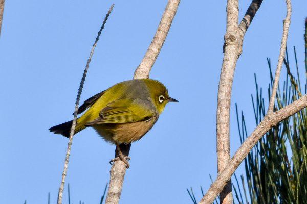 CAROLE-BIRD-PHOTOS25