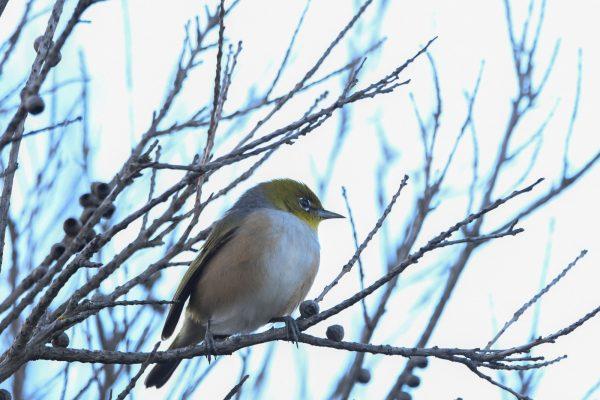 CAROLE-BIRD-PHOTOS26