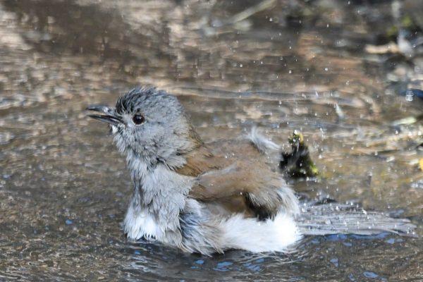 CAROLE-BIRD-PHOTOS28
