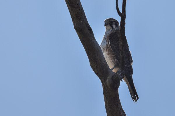CAROLE-BIRD-PHOTOS31