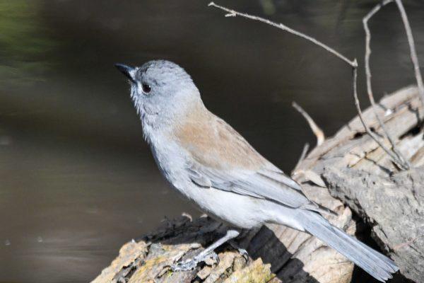 CAROLE-BIRD-PHOTOS33