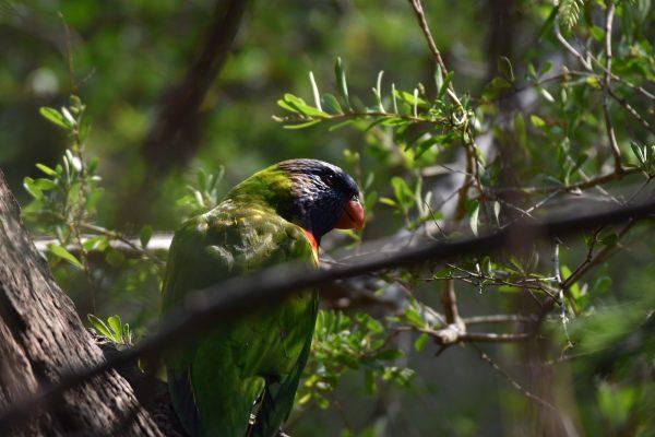 CAROLE-BIRD-PHOTOS35