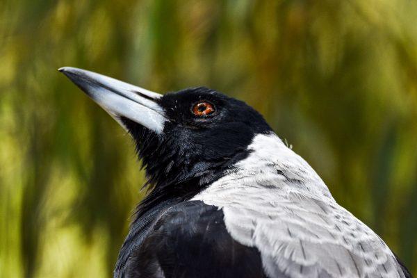 CAROLE-BIRD-PHOTOS39