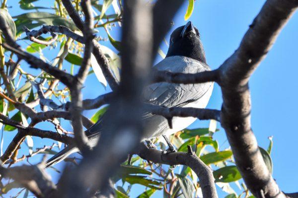 CAROLE-BIRD-PHOTOS4