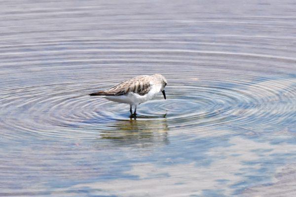 CAROLE-BIRD-PHOTOS43