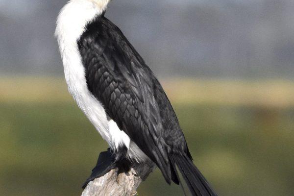 CAROLE-BIRD-PHOTOS44