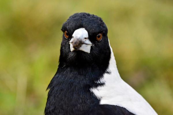 CAROLE-BIRD-PHOTOS54