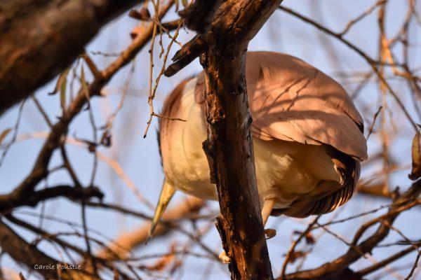 CAROLE-BIRD-PHOTOS55