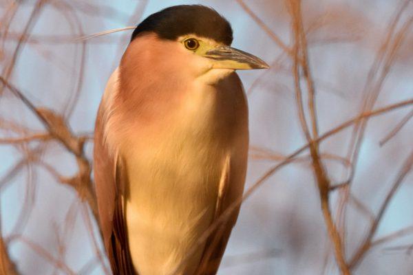 CAROLE-BIRD-PHOTOS56