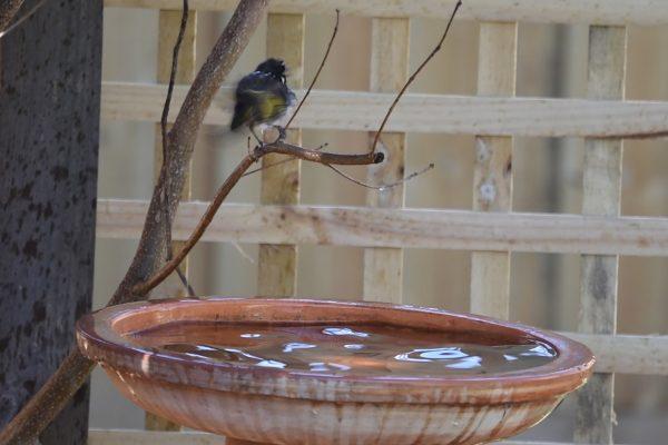 CAROLE-BIRD-PHOTOS57