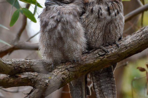 CAROLE-BIRD-PHOTOS59