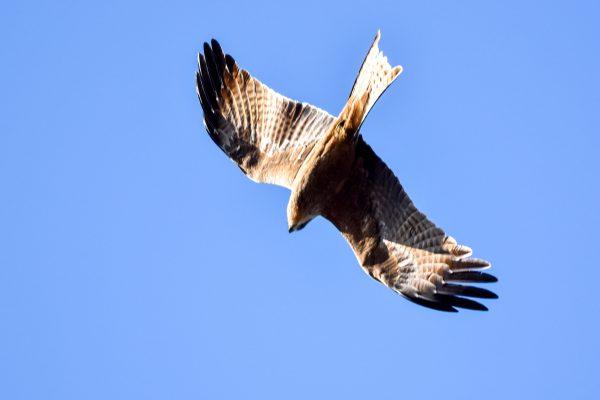 CAROLE-BIRD-PHOTOS60