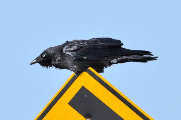 CAROLE-BIRD-PHOTOS62