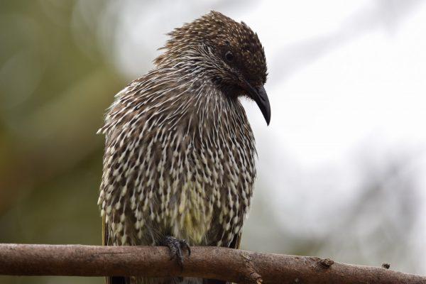 CAROLE-BIRD-PHOTOS66