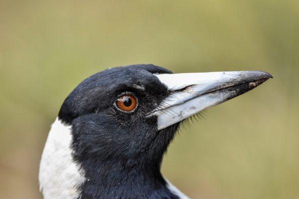 CAROLE-BIRD-PHOTOS68