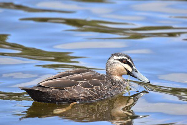 CAROLE-BIRD-PHOTOS7